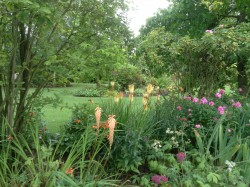 Kniphophia and Phlox