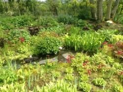 Stream and Bog Garden